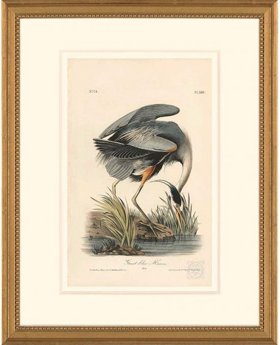 Audubon-blue-heron