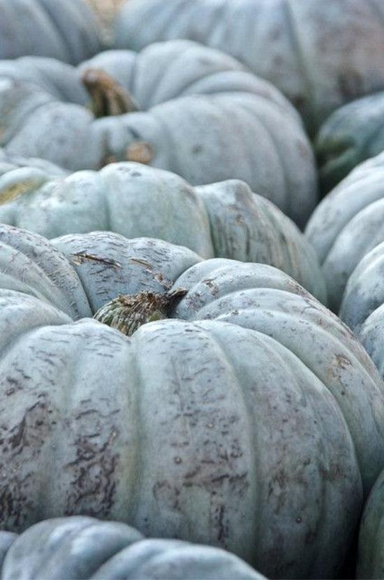 gray-blue-pumpkins