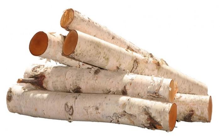 Birch-Log-Bundle