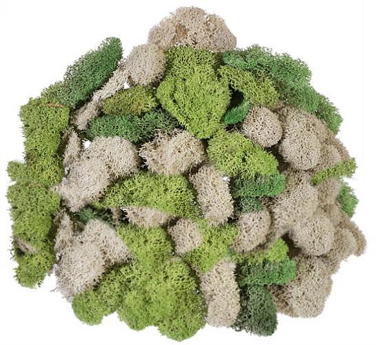 reindeer-green-moss