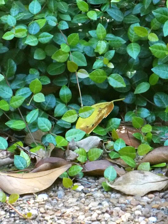 Fall Autumn Wishfall Thinking