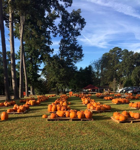 pumpkin-patch-2016