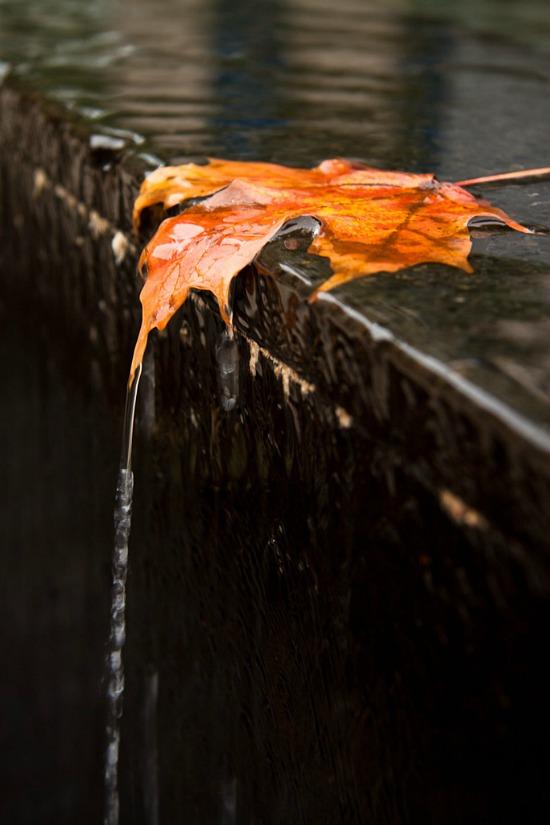 fall-leaf-rain-water