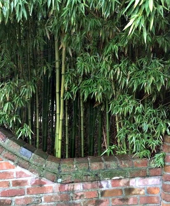 twin-oaks-bamboo