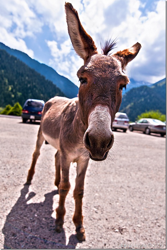 Donkey - Click on the Image to view it in my Photo Gallery