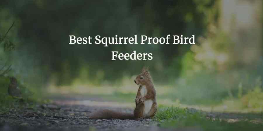 The Best Squirrel Proof Bird Feeders
