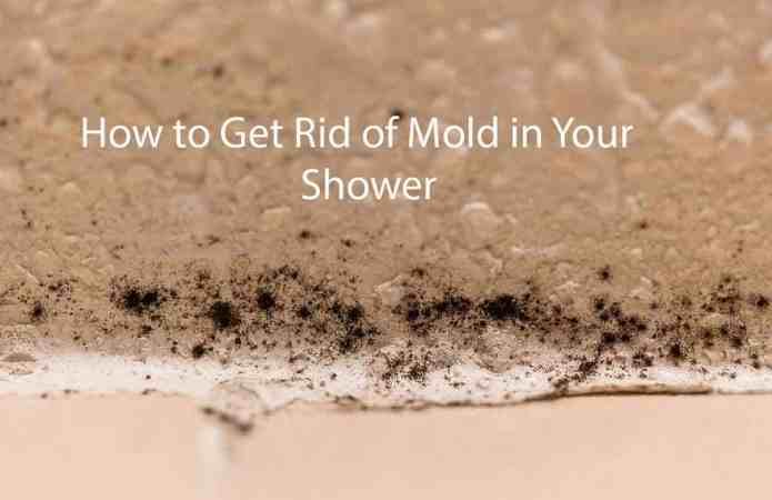 clean mold in shower