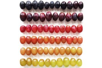 mesmerizing-photos-of-food-arranged-in-color-gradients1