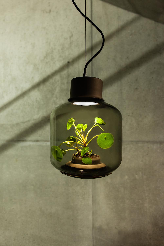 content_plain-magazine-plant-lamp-02