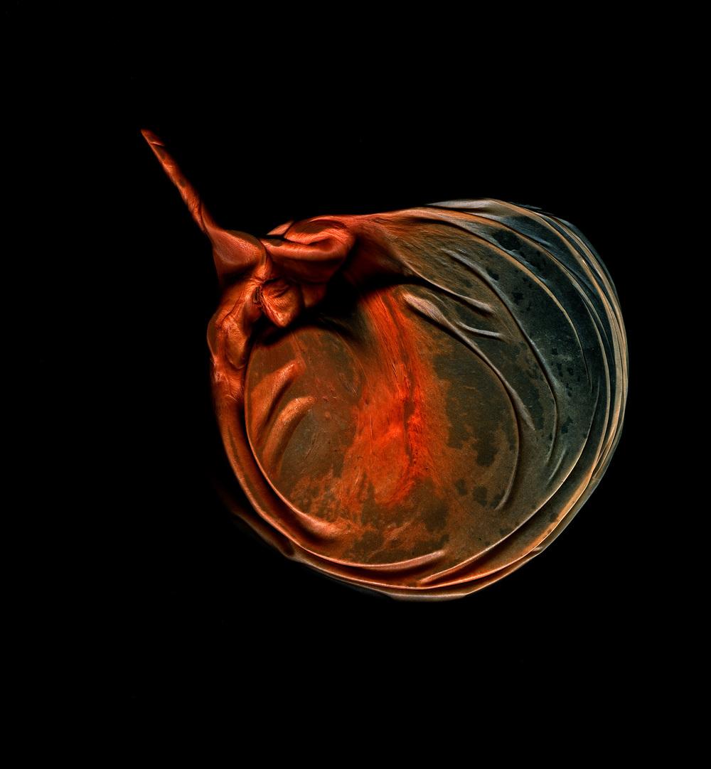 content_plain-magazine-michael-massaia-sea-creature