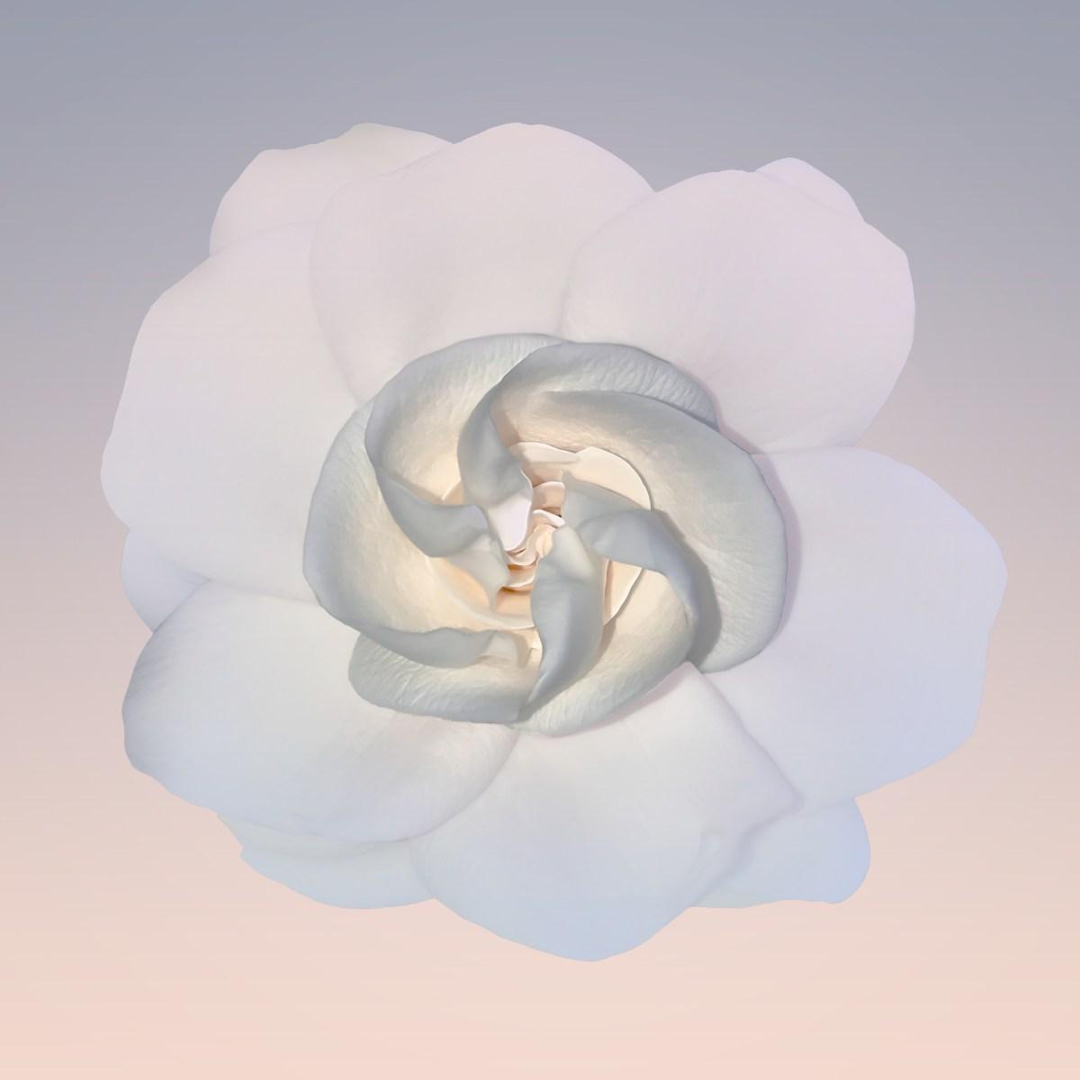 Deborah DeFranco Floral Portraits