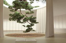 Six N. Five Japanese Garden