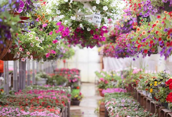 plainview-growers-succulents-allamuchy-new-jersey-greenhouse-florist