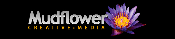 mudflower-media-website-design-saint-augustine-florida