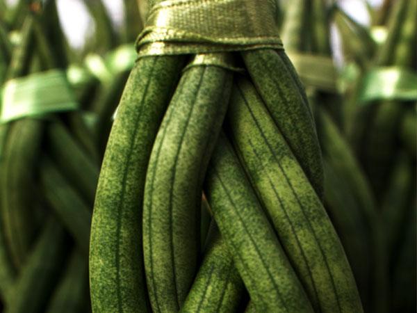 easycare-plants-succulents