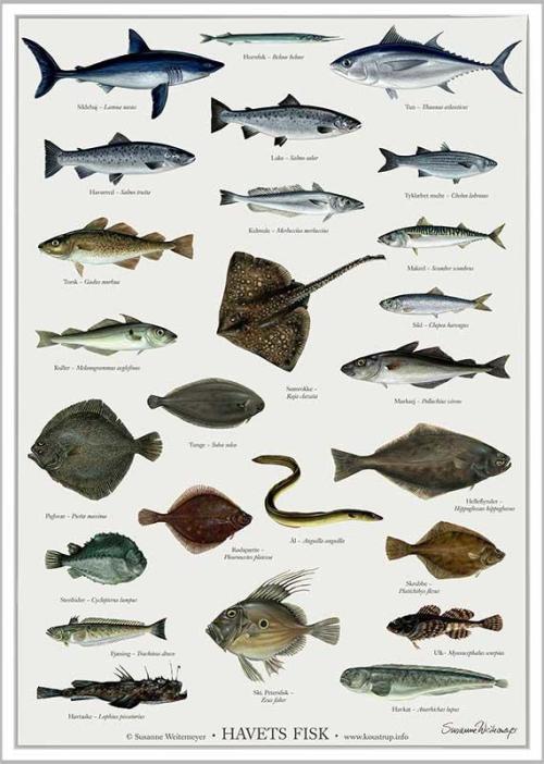 Havets fisk - susanne weitemeyer