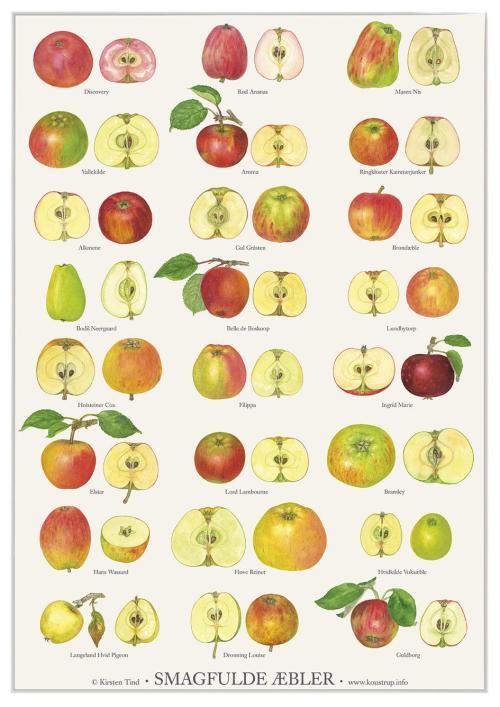 Smagfulde æbler - kirsten lind