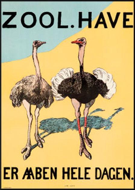 Zoologisk Have - Struds