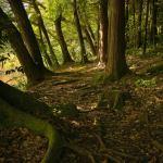 阿見町 景観観光 神田池 森林浴