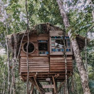 Treehouse (4-11 años)