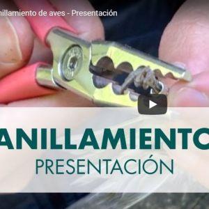 ANILLAMIENTO DE AVES: PRESENTACION