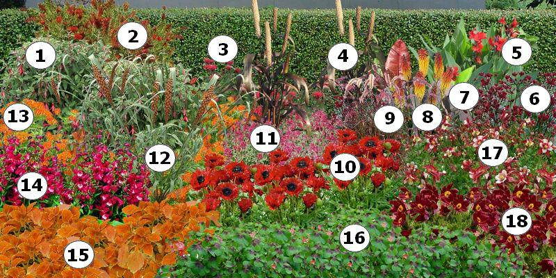 creer un massif de fleurs rouges