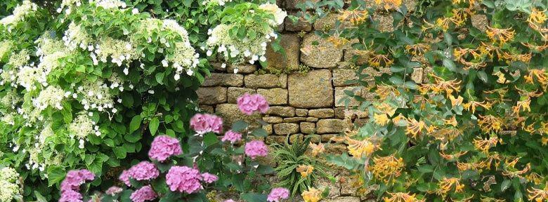 comment fleurir un mur au nord