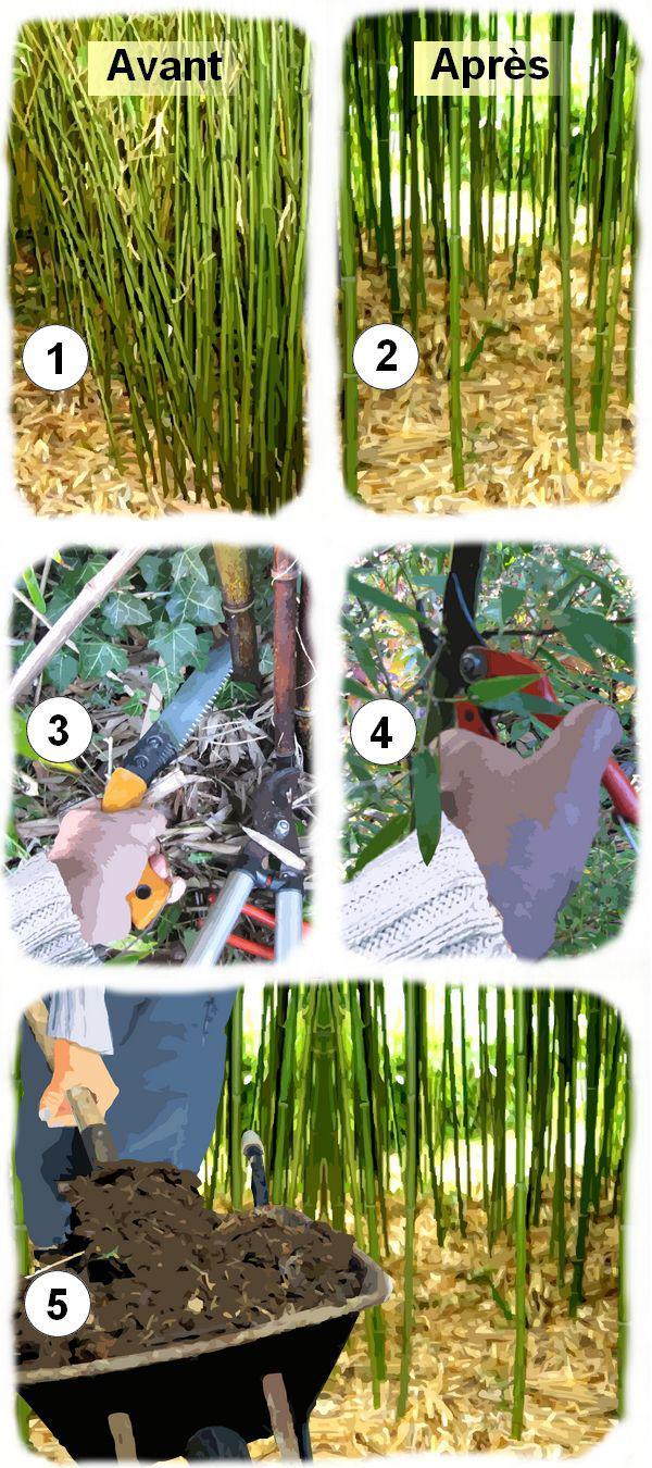 taille d eclaircissage des bambous