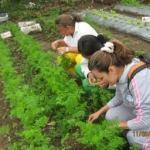 la horticultura