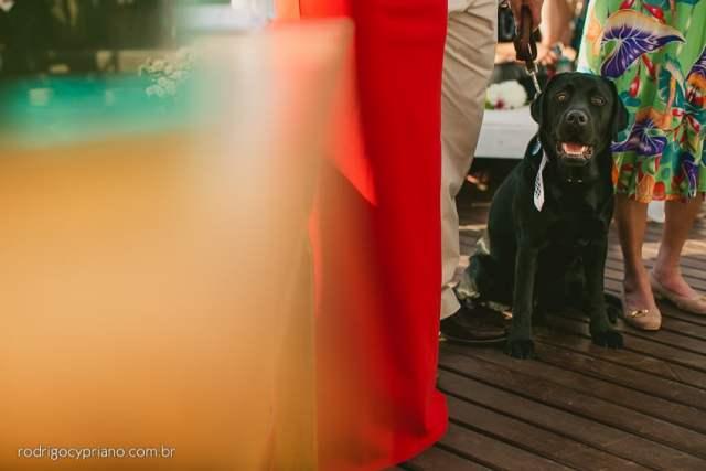 Cachorro no casamento. Foto: Rodrigo Cypriano. Mais inspirações no site Planejando Meu Casamento ( www.planejandomeucasamento.com.br ).