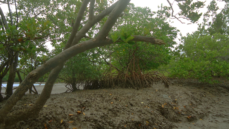 Resultado de imagem para delta do rio parnaíba mangues