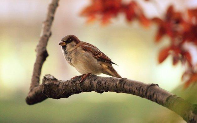 Pensez à donner à boire aux oiseaux.