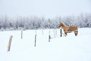 Read more about the article J'ai testé : faire du cheval dans la neige au Québec !