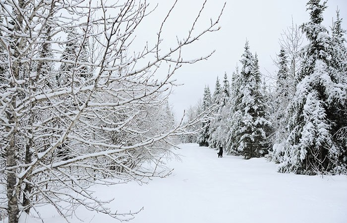 Quebec-sous-la-neige
