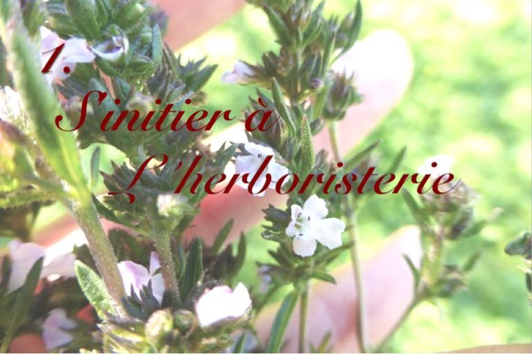 Écovolontariat : S'initier à l'herboristerie