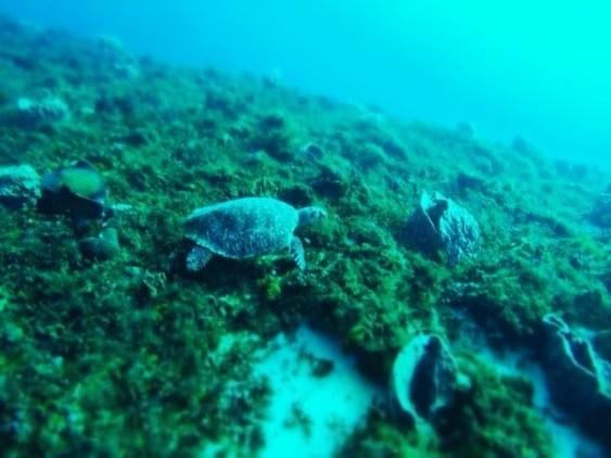 Écovolontariat : ma formation en restauration de corail