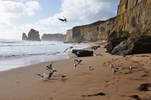 Itinéraire en Australie : mes 3 road trips favoris !