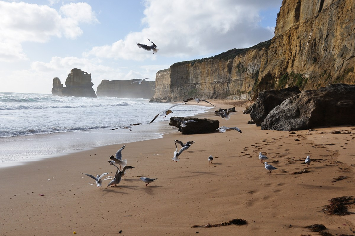 Great Ocean Road 5