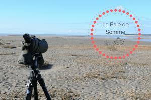 Que faire en Baie de Somme ?