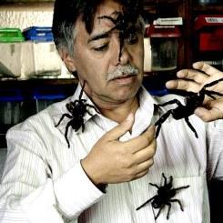doctor araña