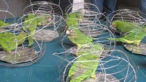 Pericos en Hueveras