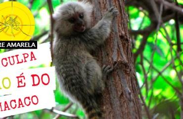 Febre amarela: Macacos não transmitem o vírus da febre
