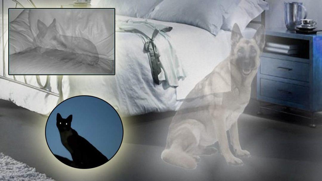 Mascotas Fantasmas, Fieles a Nosotros También Desde el Más Allá
