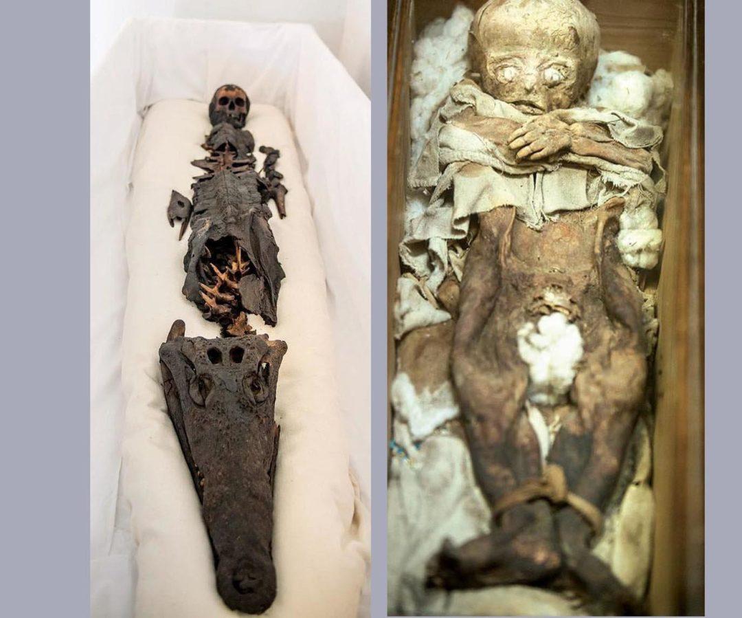 La Momia de dos Cabezas de una Princesa Egipcia y un Cocodrilo Revelado por Primera vez en Público
