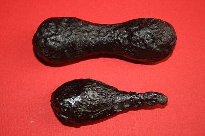Two splash-form tektites, which are a form of impact glass found on Earth. Photo Credit: Wikimedia/Brocken Inaglory