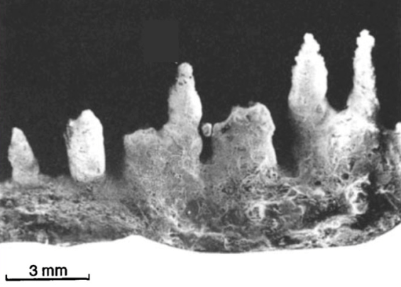 Vertical zonation of biota in microstromatolites associated with hot springs, North Island, New Zealand. Image Credit: Jones et al., Palaios, 1997