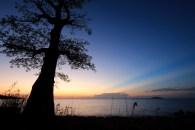 Giant Baobab Tree on Likoma