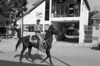 Horses in Creel