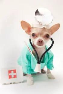 Chihuahua health