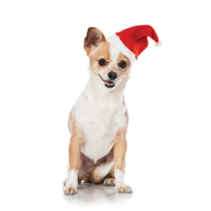 santa hat for dogs